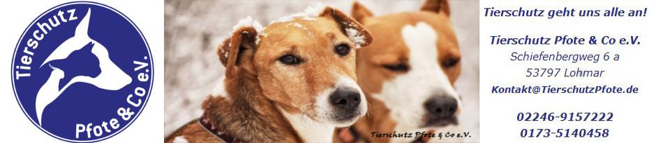 Tierschutz Pfote & Co e.V.